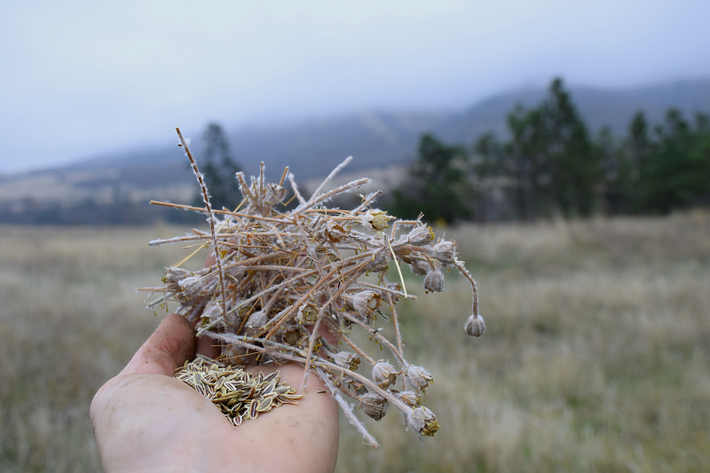 Native seeds