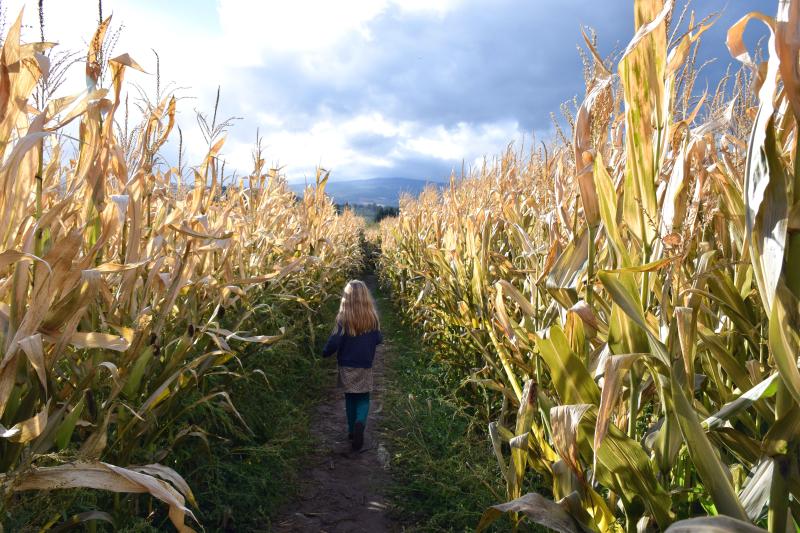 Adah in corn