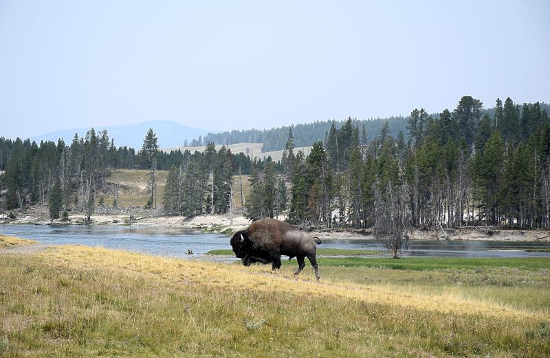 Yellowstone22