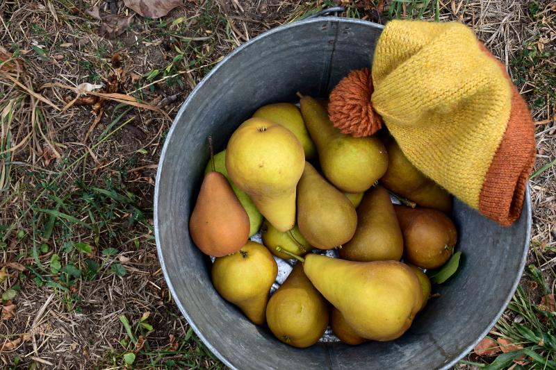 Orchard1